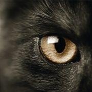 חייהם הסודיים של בעלי החיים
