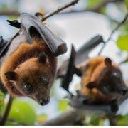 להתעלף על עטלף - מסע בעקבות היונק המעופף